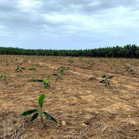 Onze toewijding aan duurzame landbouw