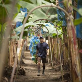 Chiquita bananen op de plantage: het draait allemaal om duurzaamheid