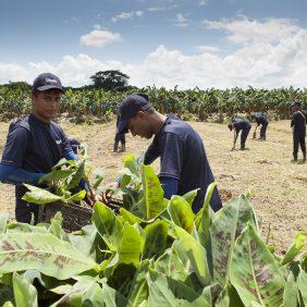 Chiquita handhaaft continuïteit in zijn missie voor duurzame landbouw